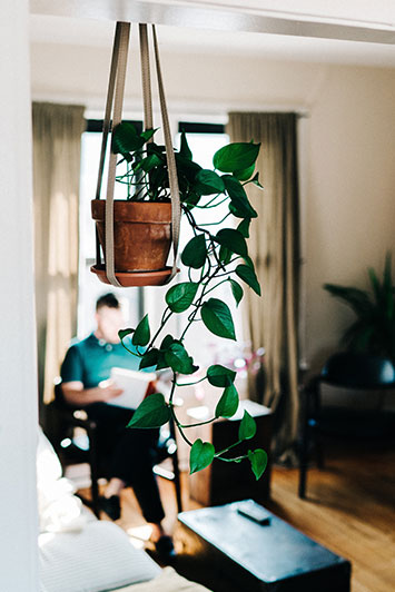 Office Plants It is a long established fact that a reader will be distracted by the readable